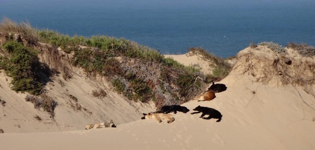Hundar i Cascais